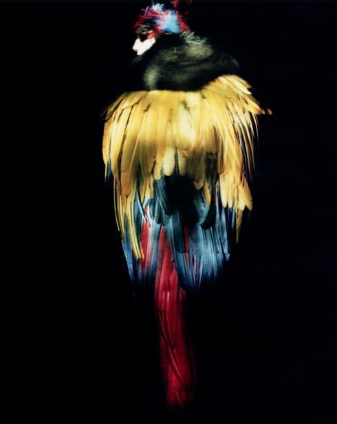 Dior Images: album.jpg